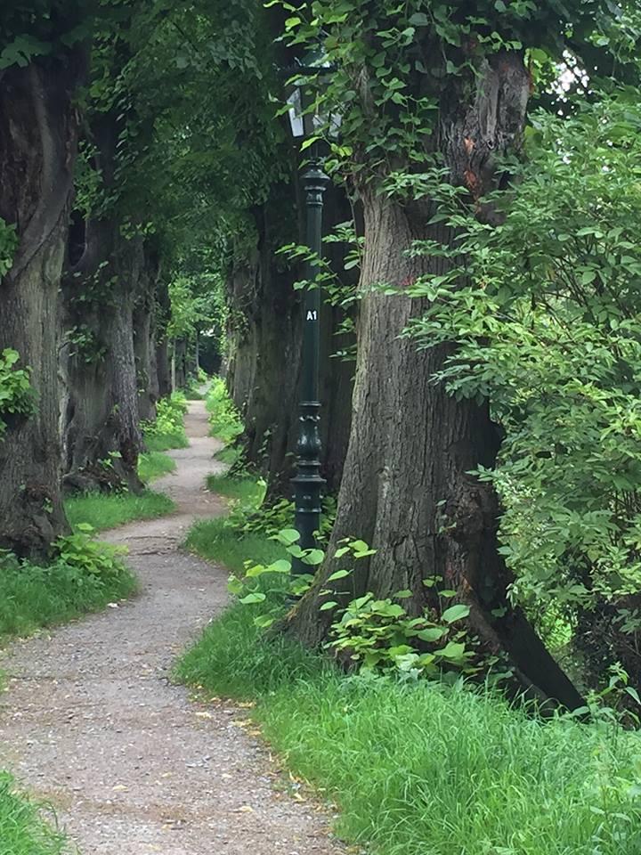 Path. jpg